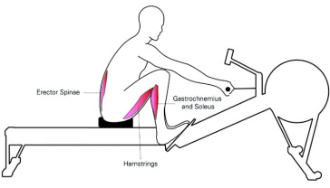 rowing-machine-muscle-impact
